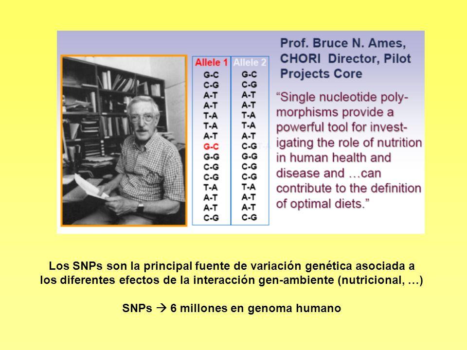 SNPs  6 millones en genoma humano