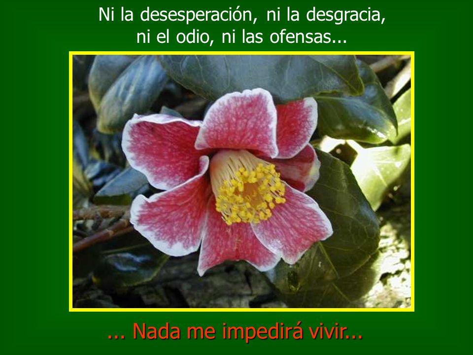 Ni la desesperación, ni la desgracia, ni el odio, ni las ofensas...