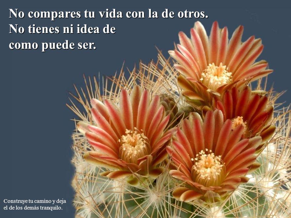 No compares tu vida con la de otros. No tienes ni idea de