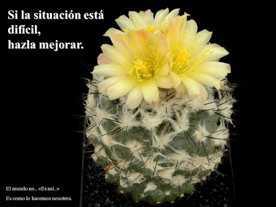 Si la situación está difícil, hazla mejorar. El mundo no.. «Es así..»