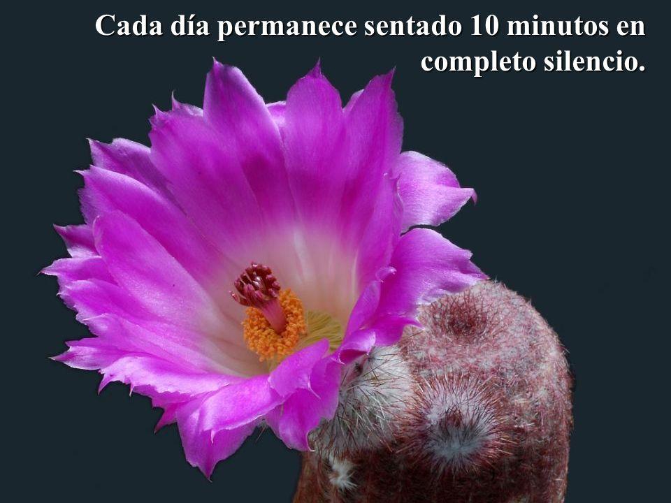 Cada día permanece sentado 10 minutos en completo silencio.