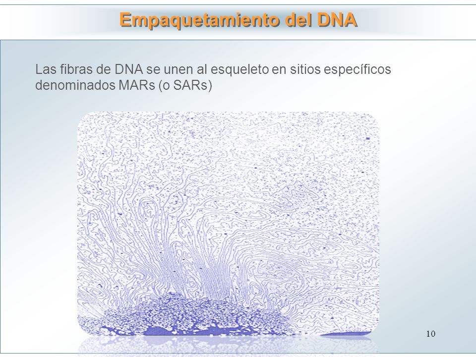 Empaquetamiento del DNA