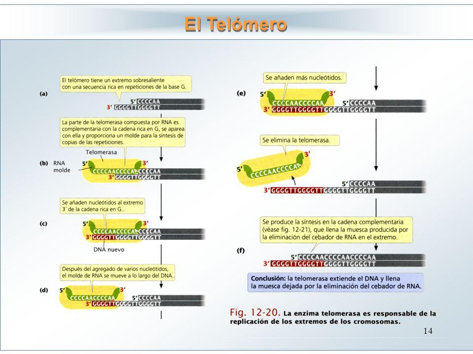 El Telómero