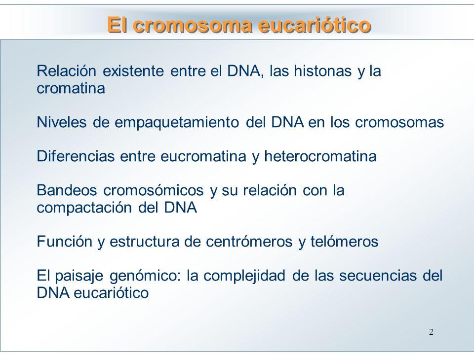 El cromosoma eucariótico