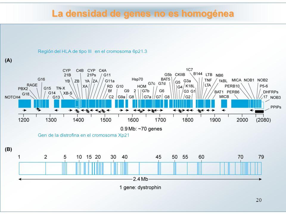 La densidad de genes no es homogénea