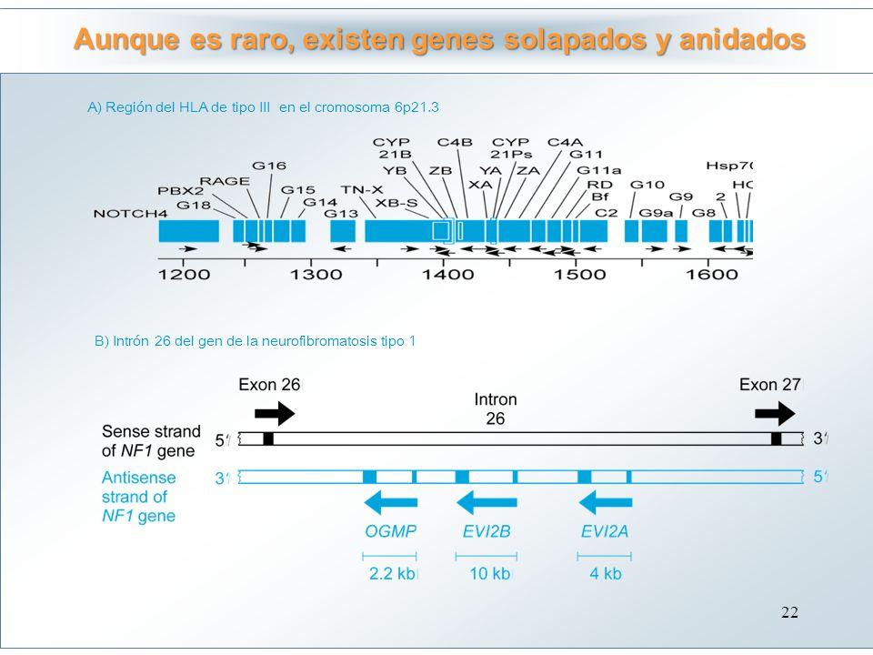 Aunque es raro, existen genes solapados y anidados