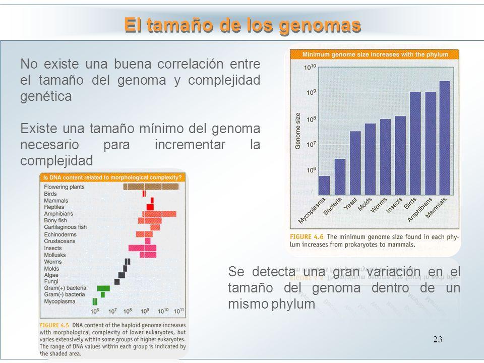 El tamaño de los genomas