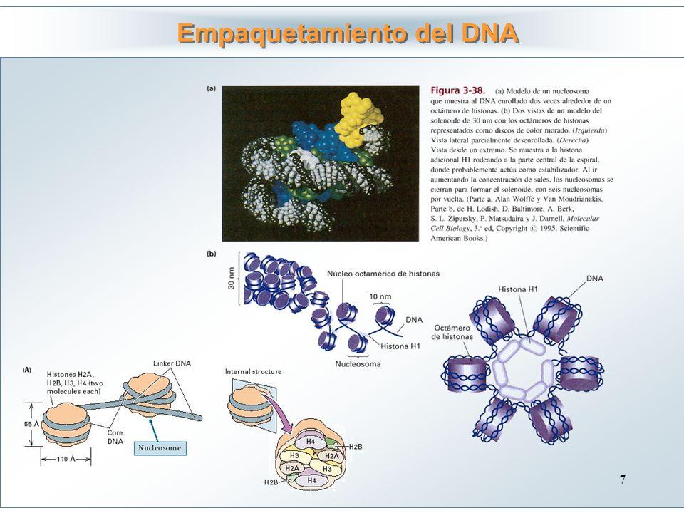 Empaquetamiento del DNA