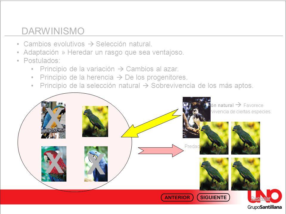 X X X DARWINISMO Cambios evolutivos  Selección natural.
