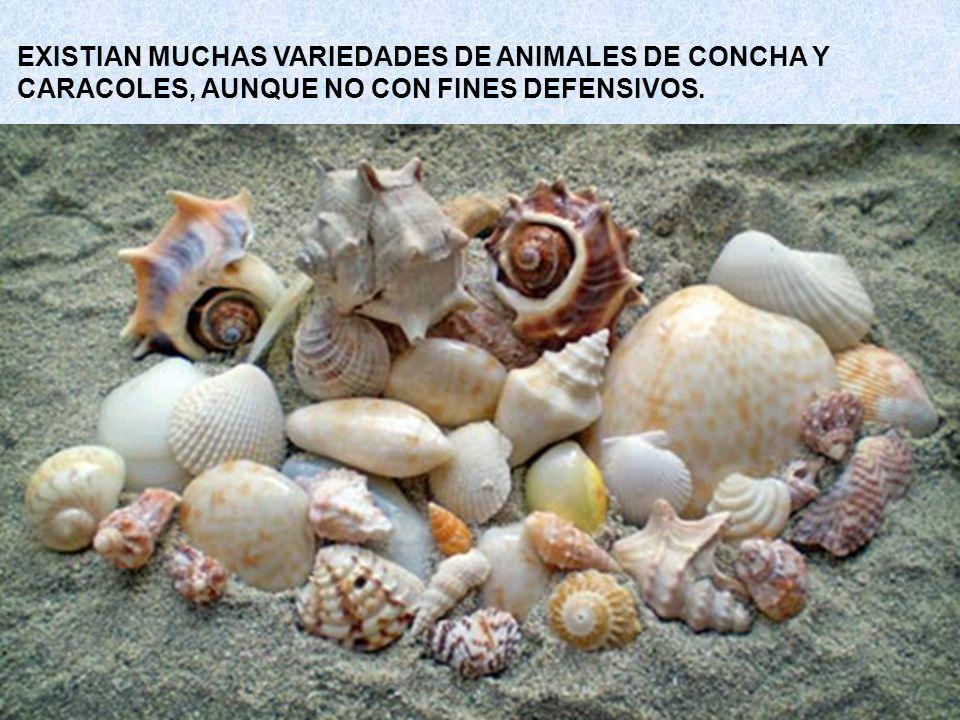 EXISTIAN MUCHAS VARIEDADES DE ANIMALES DE CONCHA Y