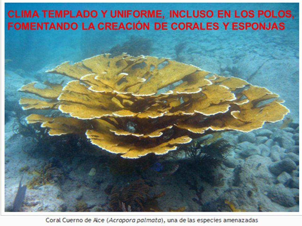 CLIMA TEMPLADO Y UNIFORME, INCLUSO EN LOS POLOS,