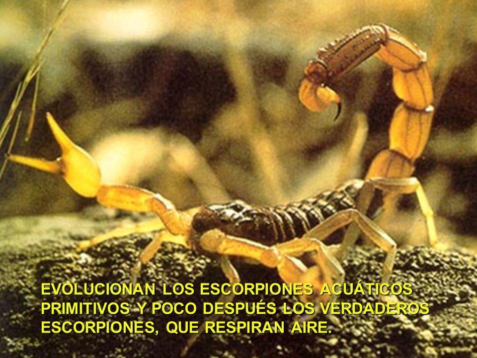 EVOLUCIONAN LOS ESCORPIONES ACUÁTICOS