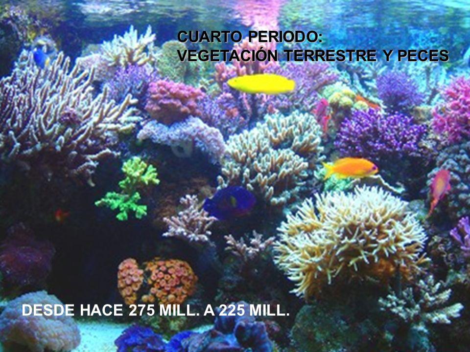 CUARTO PERIODO: VEGETACIÓN TERRESTRE Y PECES DESDE HACE 275 MILL. A 225 MILL.
