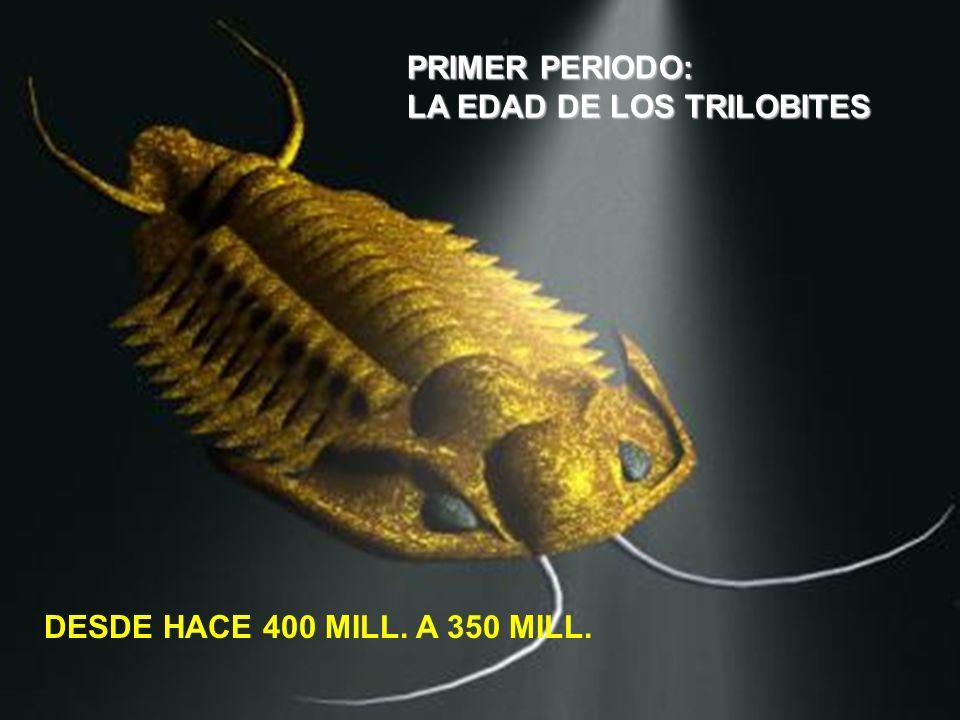 PRIMER PERIODO: LA EDAD DE LOS TRILOBITES DESDE HACE 400 MILL. A 350 MILL.