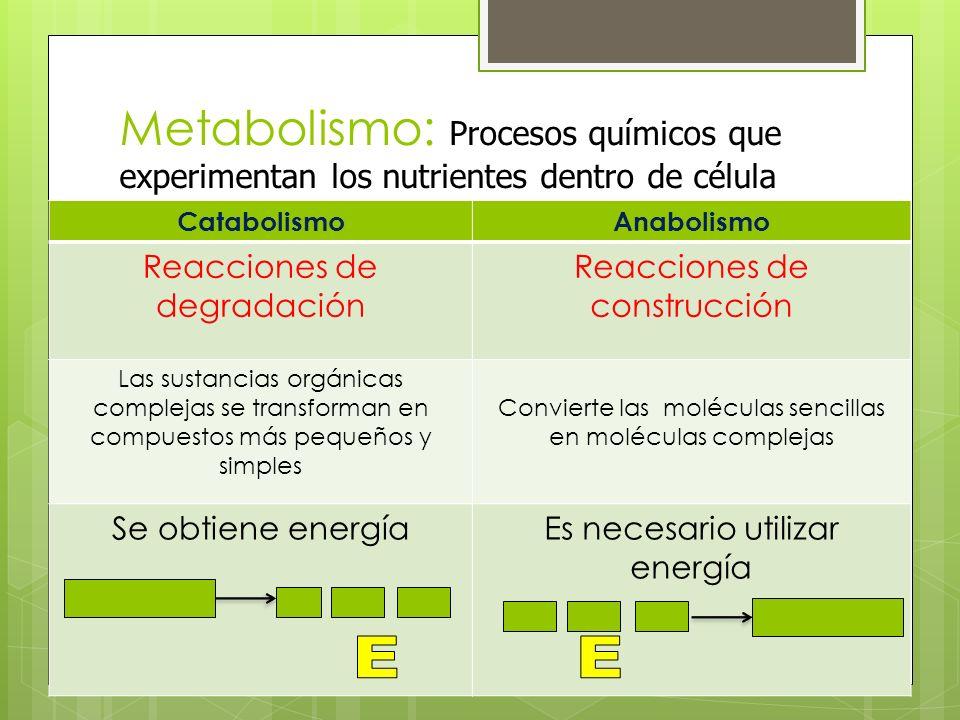 Metabolismo: Procesos químicos que experimentan los nutrientes dentro de célula