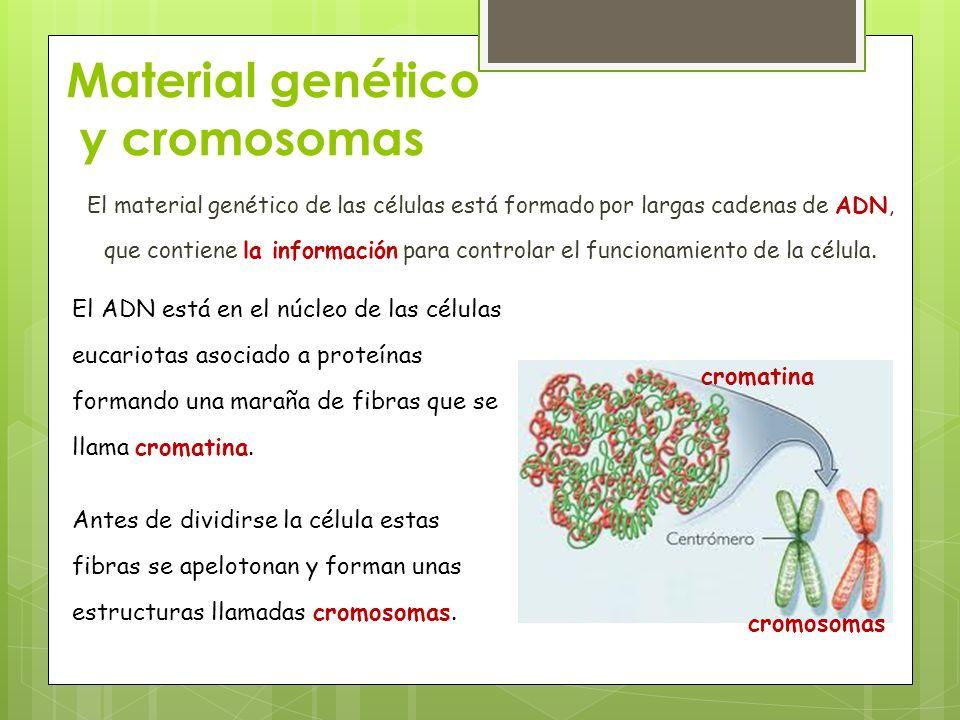 Material genético y cromosomas