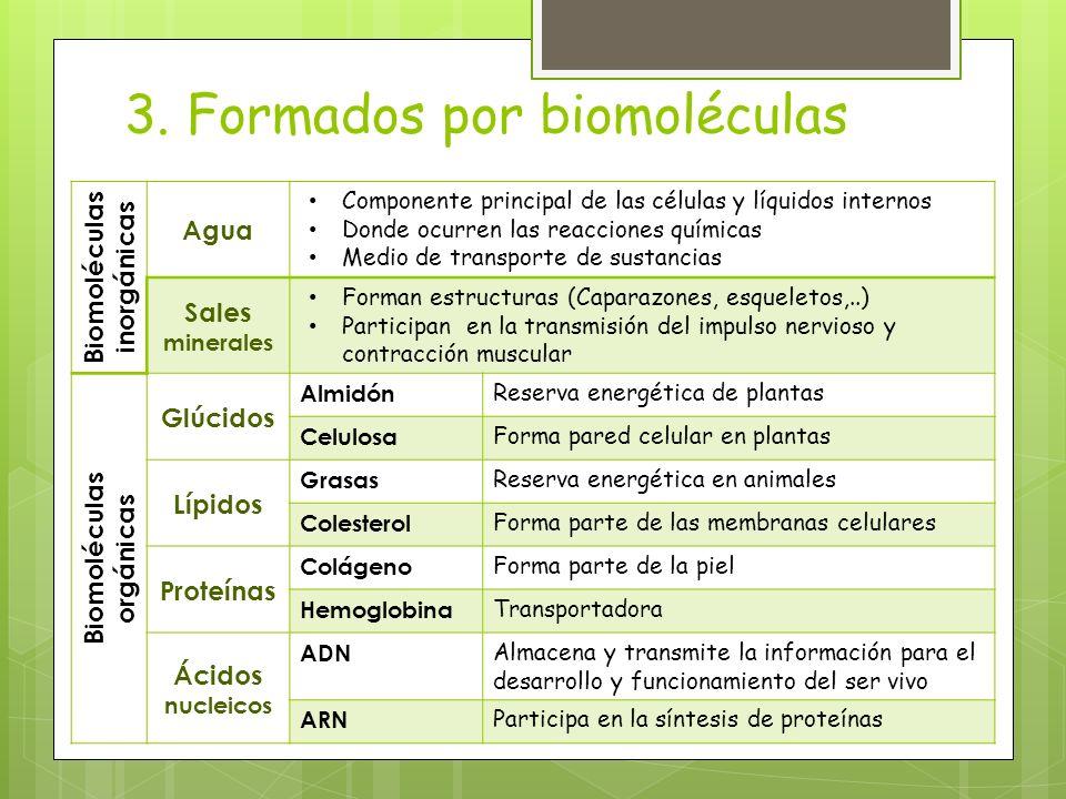 3. Formados por biomoléculas