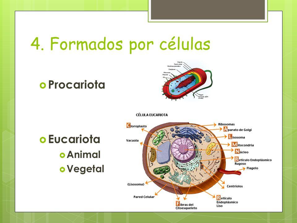 4. Formados por células Procariota Eucariota Animal Vegetal