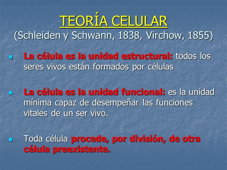 TEORÍA CELULAR (Schleiden y Schwann, 1838, Virchow, 1855)