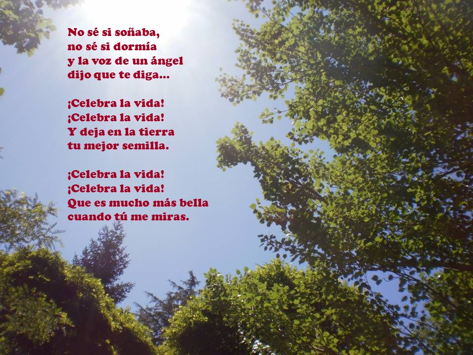No sé si soñaba, no sé si dormía. y la voz de un ángel. dijo que te diga… ¡Celebra la vida! Y deja en la tierra.