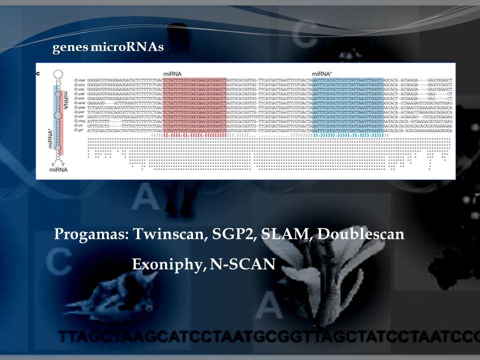 genes microRNAs Progamas: Twinscan, SGP2, SLAM, Doublescan