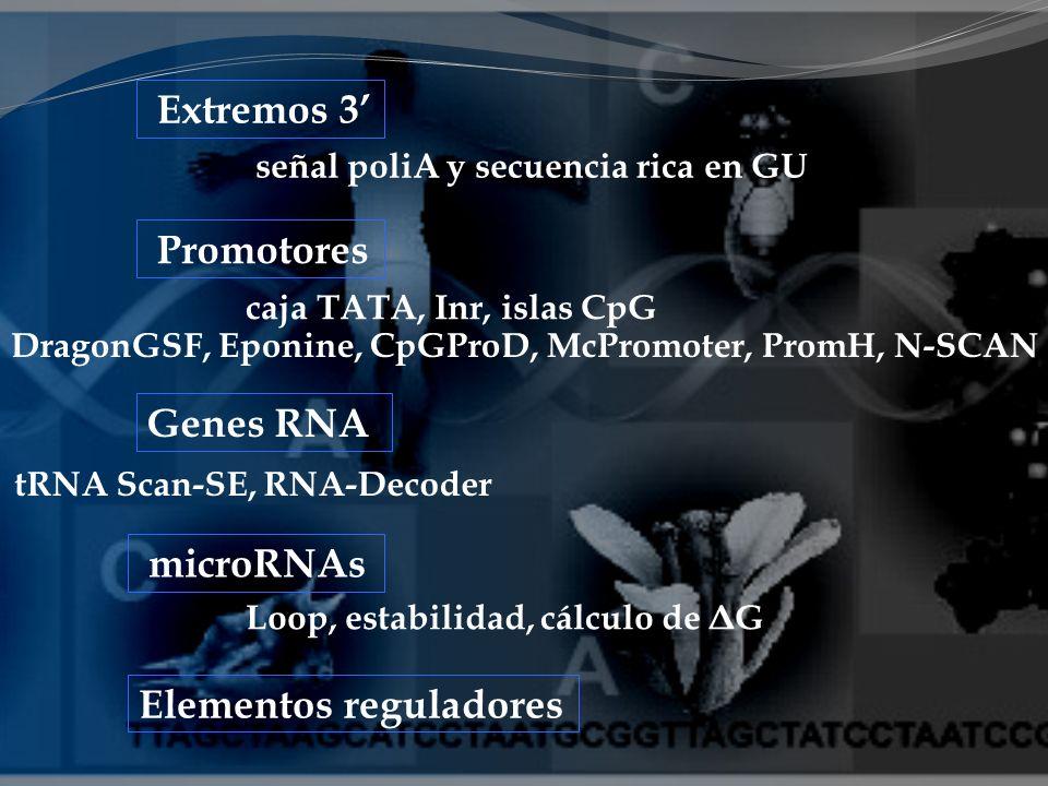 Elementos reguladores