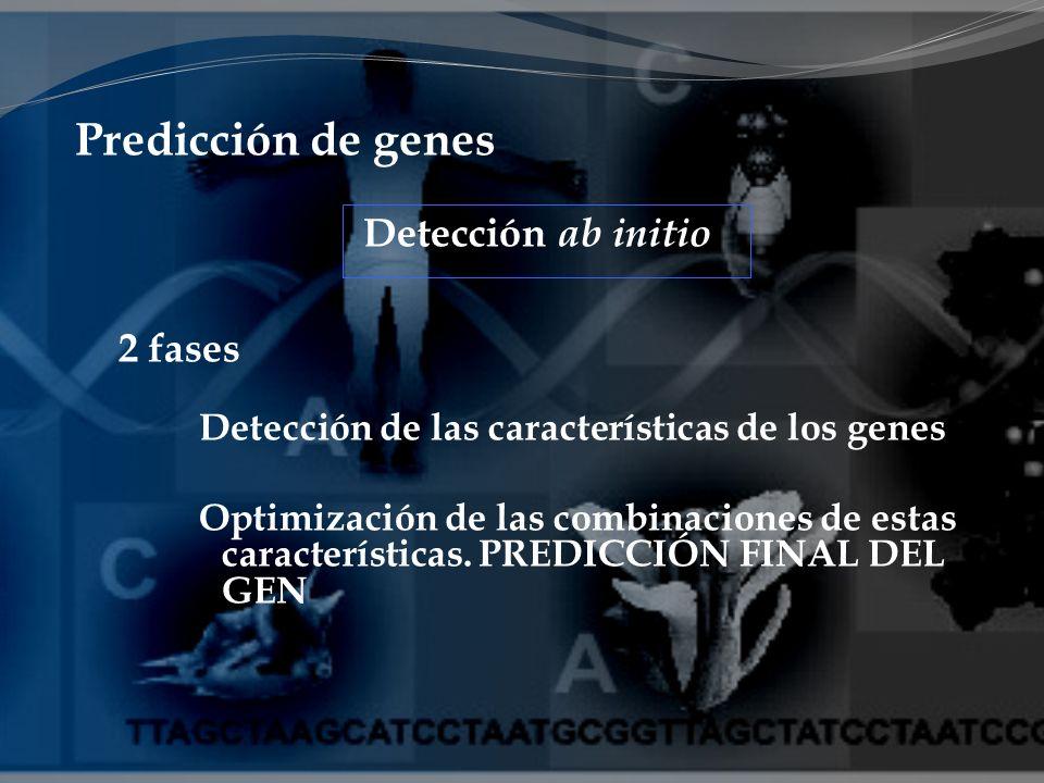 Predicción de genes Detección ab initio 2 fases