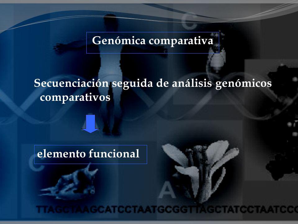elemento funcional Genómica comparativa