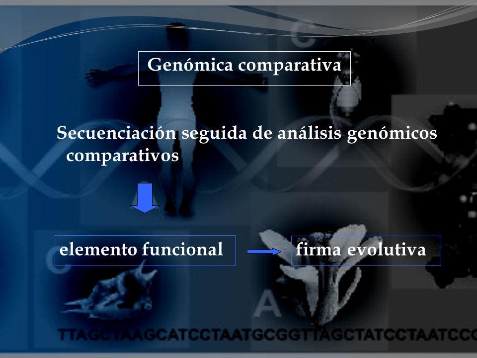 elemento funcional firma evolutiva Genómica comparativa