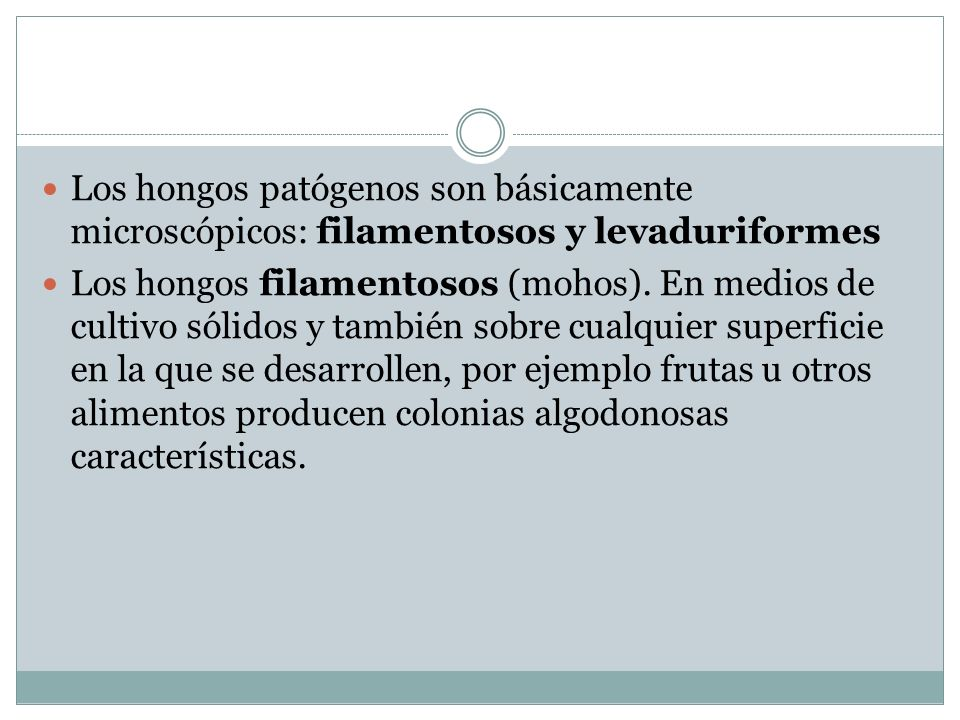 Los hongos patógenos son básicamente microscópicos: filamentosos y levaduriformes