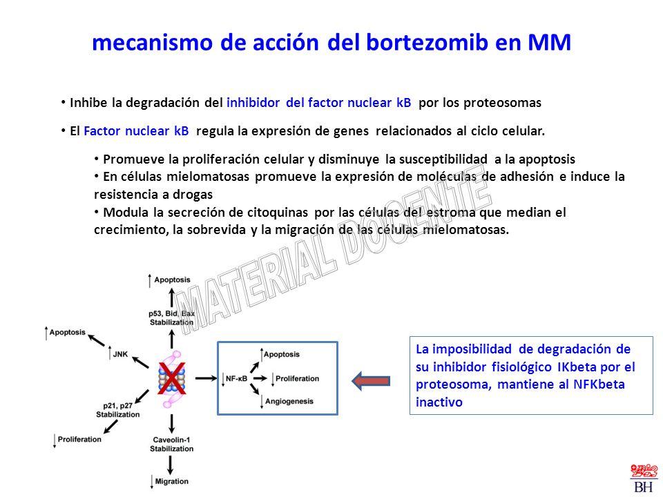 mecanismo de acción del bortezomib en MM