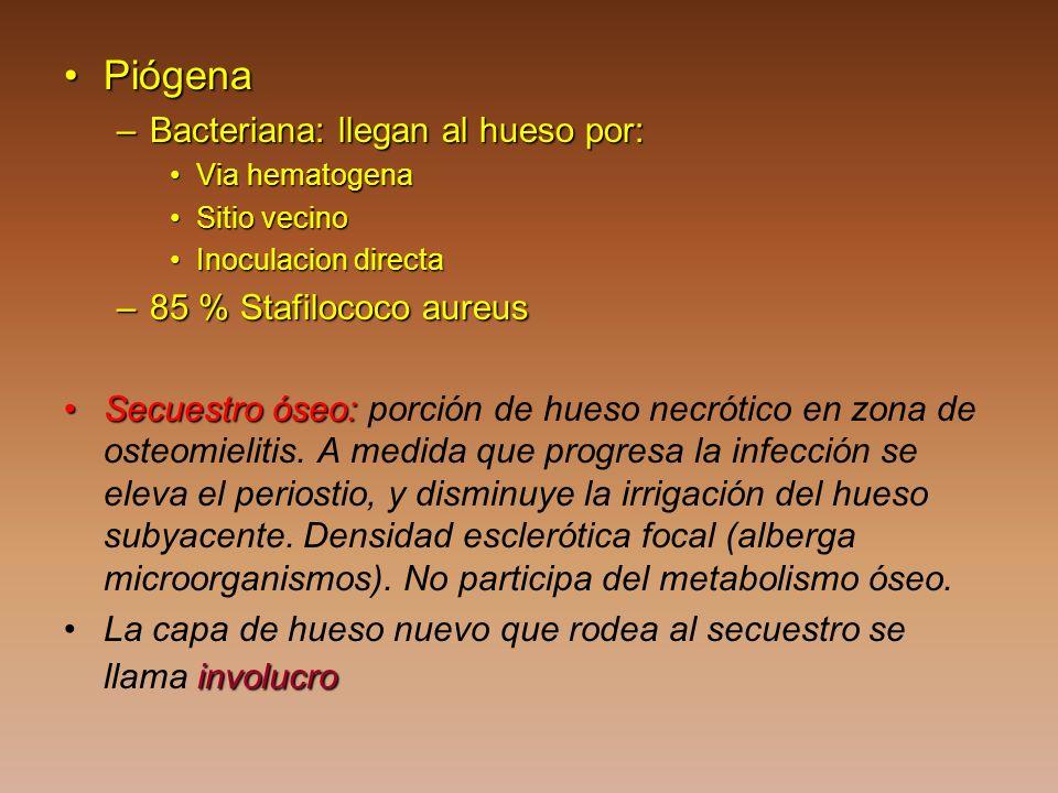 Piógena Bacteriana: llegan al hueso por: 85 % Stafilococo aureus