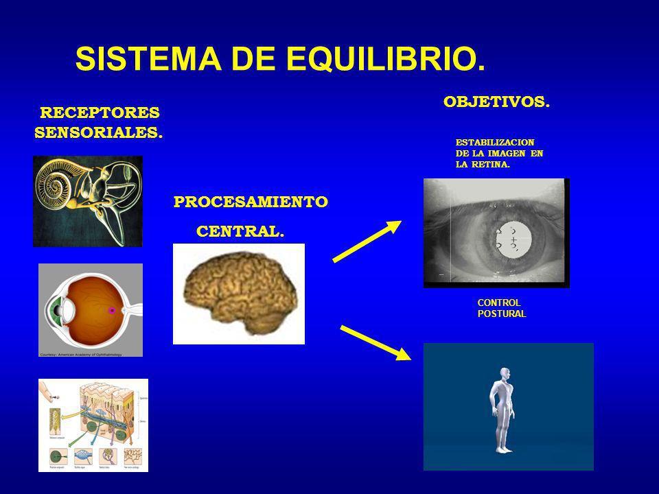 SISTEMA DE EQUILIBRIO. OBJETIVOS. RECEPTORES SENSORIALES.