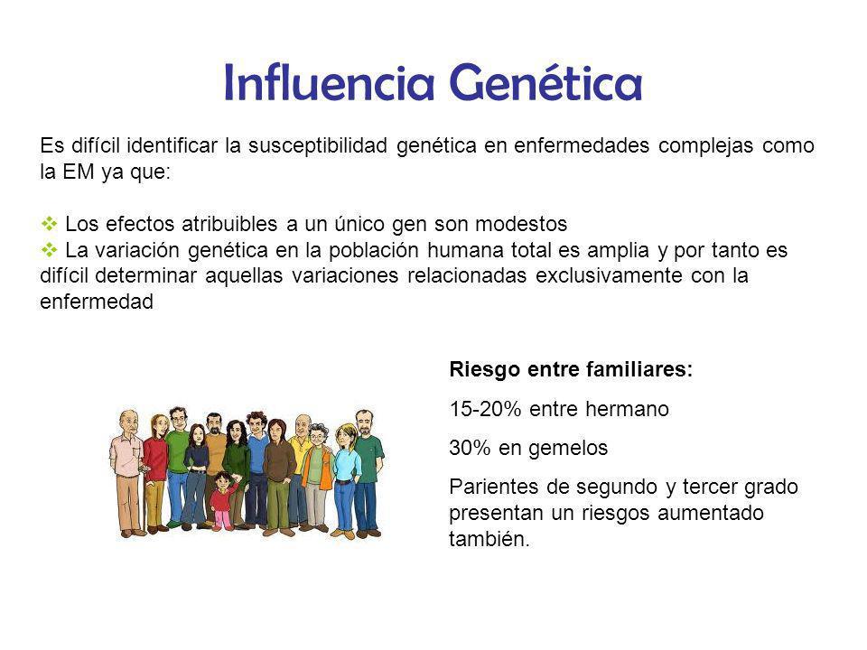 Influencia Genética Es difícil identificar la susceptibilidad genética en enfermedades complejas como la EM ya que: