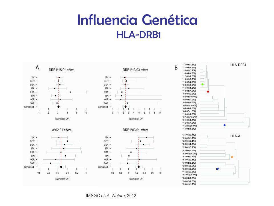 Influencia Genética HLA-DRB1