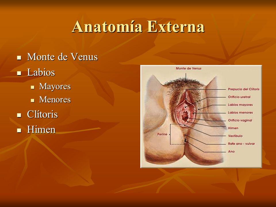 Anatomía Externa Monte de Venus Labios Mayores Menores Clítoris Himen