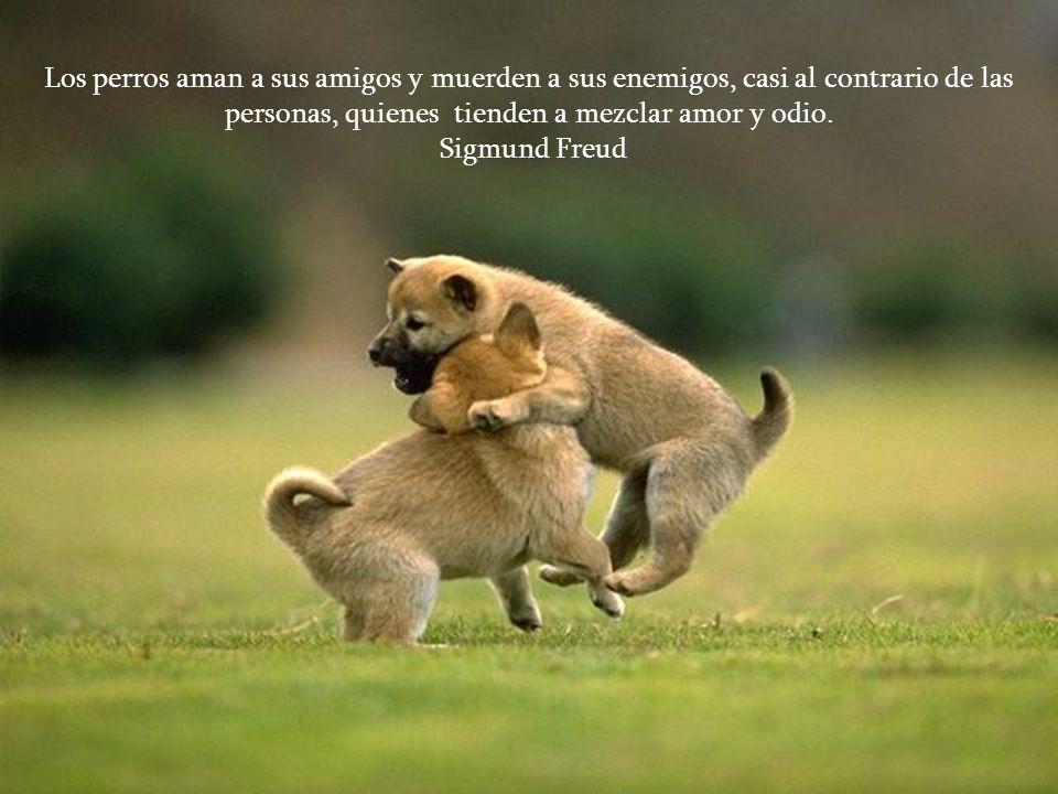Los perros aman a sus amigos y muerden a sus enemigos, casi al contrario de las personas, quienes tienden a mezclar amor y odio.