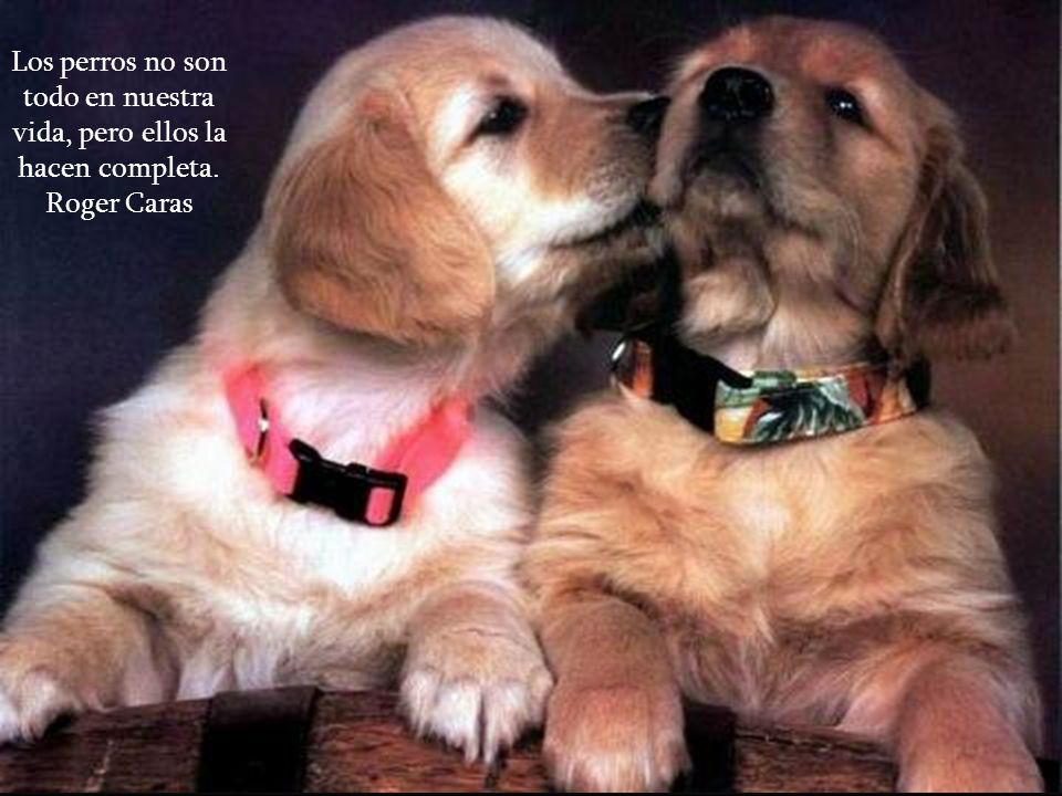 Los perros no son todo en nuestra vida, pero ellos la hacen completa.