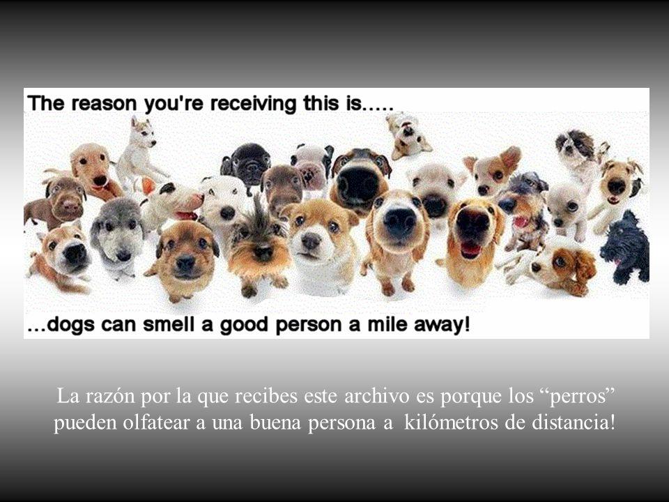 La razón por la que recibes este archivo es porque los perros pueden olfatear a una buena persona a kilómetros de distancia!