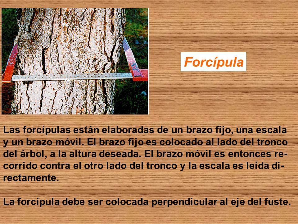 Forcípula Las forcípulas están elaboradas de un brazo fijo, una escala
