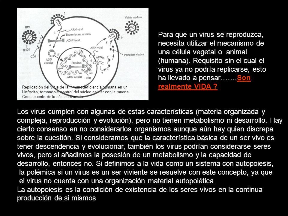 el virus no cuenta con una organización material autopoiética.