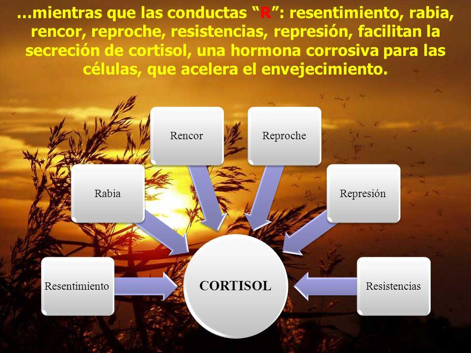 …mientras que las conductas R : resentimiento, rabia, rencor, reproche, resistencias, represión, facilitan la secreción de cortisol, una hormona corrosiva para las células, que acelera el envejecimiento.