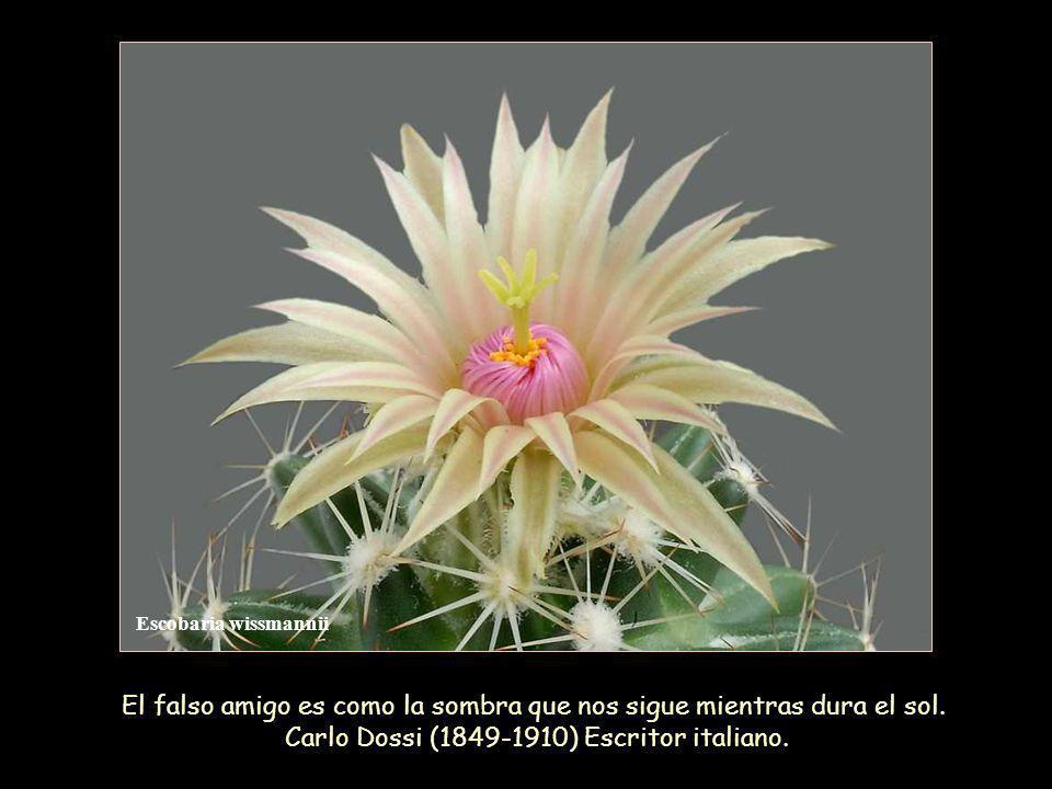 El falso amigo es como la sombra que nos sigue mientras dura el sol.