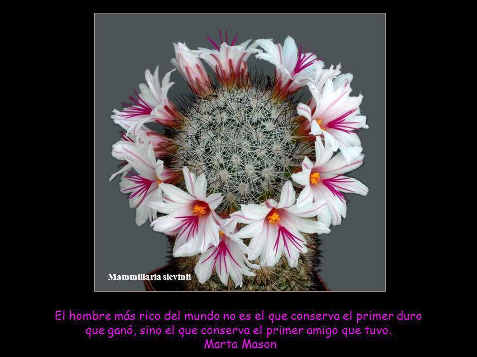 Mammillaria slevinii El hombre más rico del mundo no es el que conserva el primer duro que ganó, sino el que conserva el primer amigo que tuvo.
