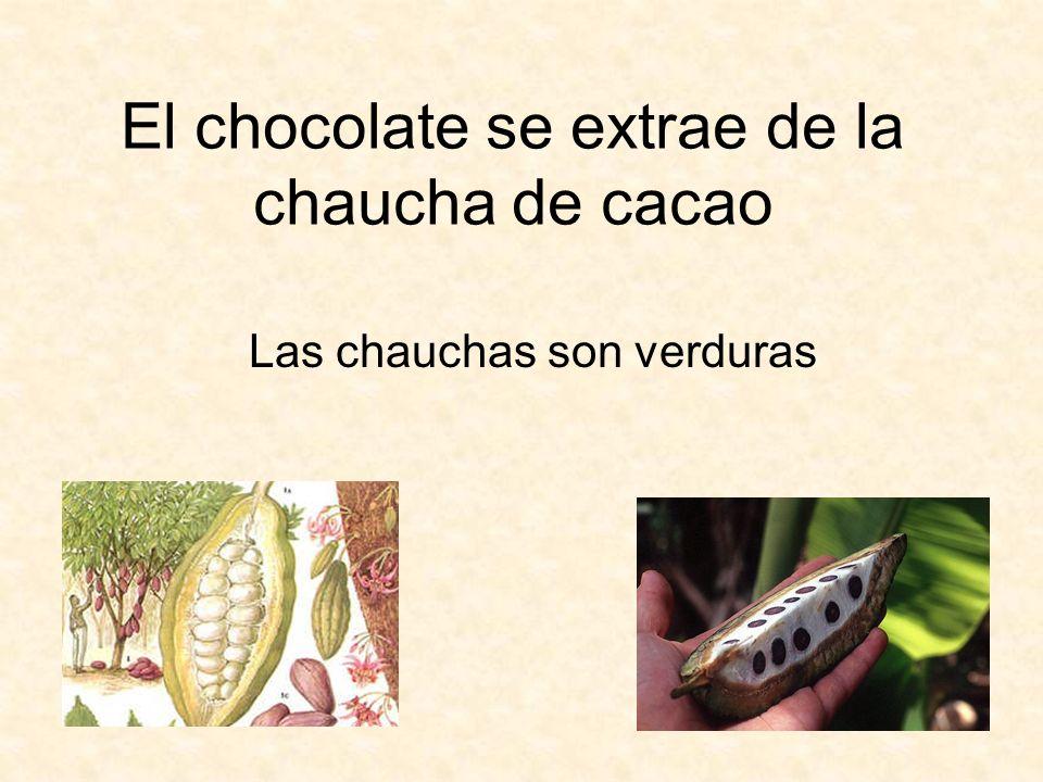 El chocolate se extrae de la chaucha de cacao