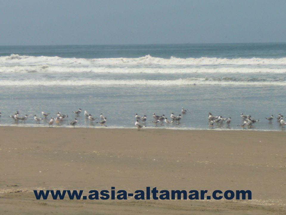 www.asia-altamar.com