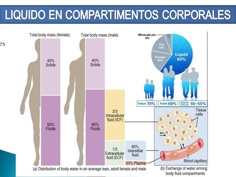 LIQUIDO EN COMPARTIMENTOS CORPORALES