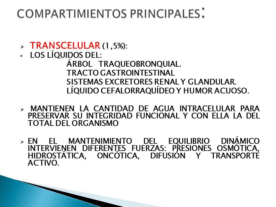 COMPARTIMIENTOS PRINCIPALES: