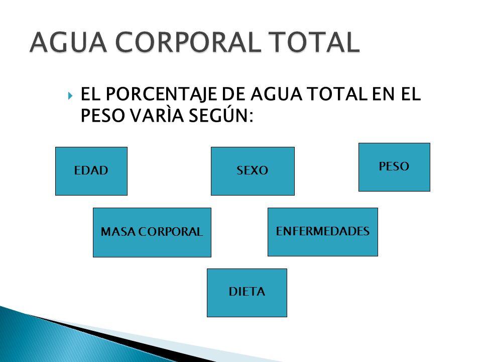 AGUA CORPORAL TOTAL EL PORCENTAJE DE AGUA TOTAL EN EL PESO VARÌA SEGÚN: PESO. EDAD. SEXO. MASA CORPORAL.