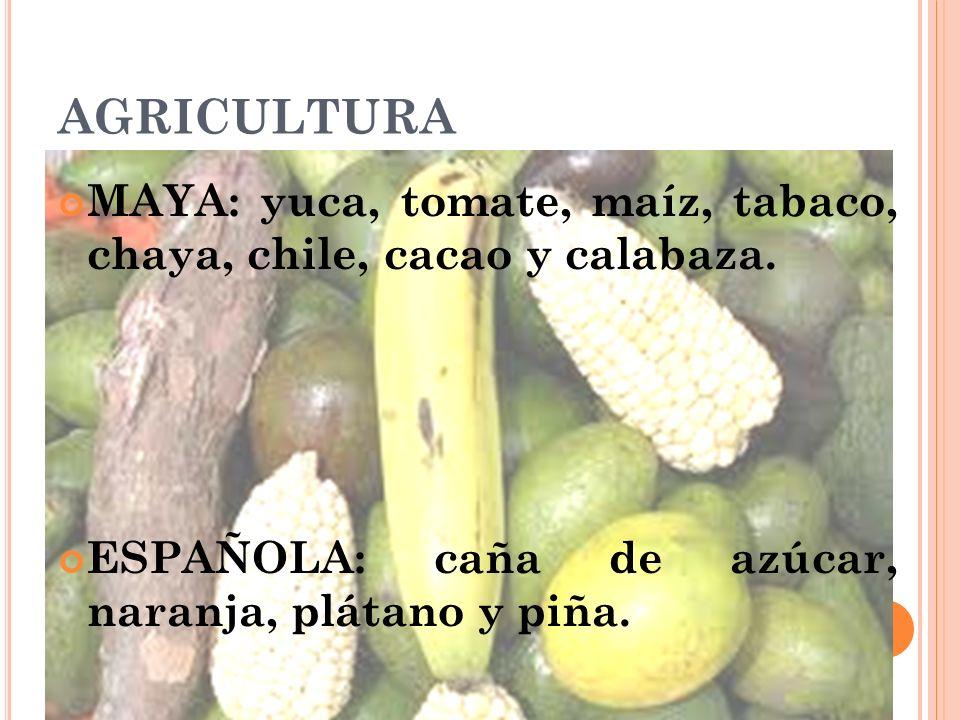 AGRICULTURA MAYA: yuca, tomate, maíz, tabaco, chaya, chile, cacao y calabaza.